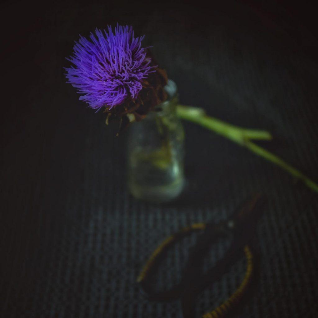 beautiful flower from an artichoke